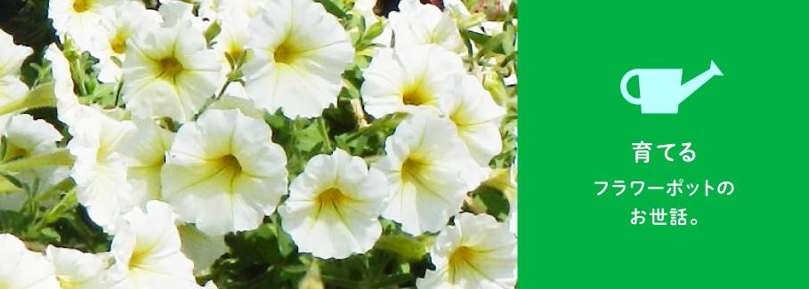 西宮を花と緑にする会 育てる ポット